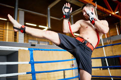 Kickboxer Training with Resistance Belts. Portrait of shirtless fighter practicing high kick with resistance band belt in boxing ring Royalty Free Stock Photography