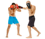 Kickboxers sparring on white Royalty Free Stock Photography