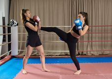 Kickboxing girls sparring. Female kickboxers sparring in the ring stock photography