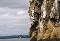 Kicker Rock, Galapagos Stock Photos