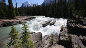 Kicking Horse river waterfalls. Yoho National park, British Columbia, Canada stock video