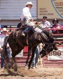 Kicking up the Dirt Stock Photo