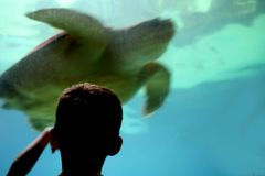 Kid at aquarium Stock Photos
