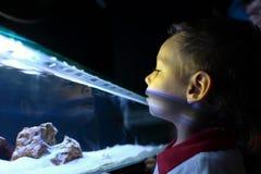 Kid at aquarium Stock Photos
