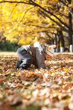 Kid in autumn wood Royalty Free Stock Photography