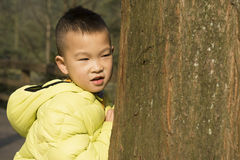 Kid behind tree Stock Photo
