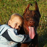 The kid and a big dog are friends Stock Images