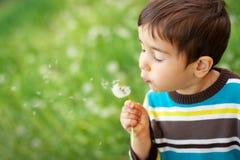 Kid blowing dandelion. Outdoor on green stock photos