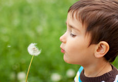 Kid blowing dandelion Royalty Free Stock Images
