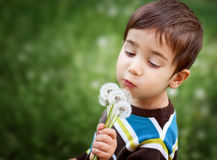 Kid blowing dandelion Stock Image