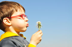 Kid blowing dandelion Stock Images