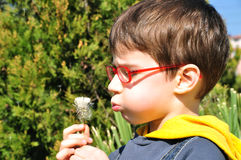Kid blowing dandelion Royalty Free Stock Photos