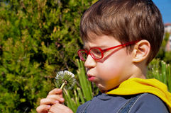 Kid blowing dandelion Royalty Free Stock Image