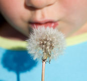 Kid blowing dandelion seeds - closeup Royalty Free Stock Images