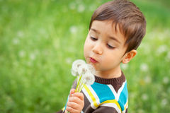 Kid blowing dandelions Royalty Free Stock Images