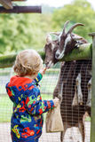Kid boy  feeding goats on an animal farm Royalty Free Stock Photography