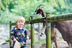 Kid boy feeding goats on an animal farm Royalty Free Stock Image