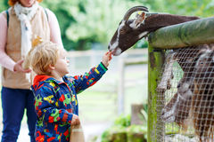 Kid boy  feeding goats on an animal farm Royalty Free Stock Photo