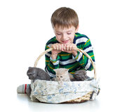 Kid boy with kittens on white background Royalty Free Stock Photos