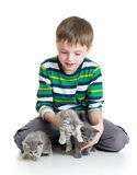 Kid boy with kittens on white background Stock Photos