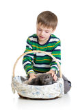Kid boy with kittens on white background Royalty Free Stock Images