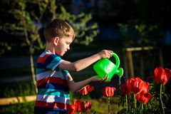 Kid boy outdoors in the garden with watering can stock photos
