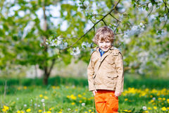 Kid boy in spring garden with blooming apple trees Stock Photos