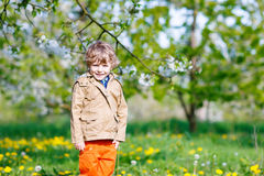 Kid boy in spring garden with blooming apple trees Royalty Free Stock Photo