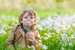 Kid boy in spring garden with blooming flowers stock images
