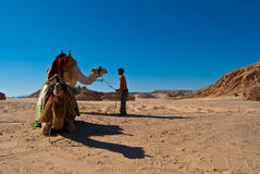 Kid with camels in the dahab desert Stock Photos