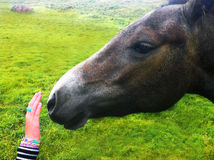 Kid caressing a horse Stock Photos