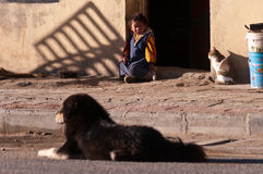 Kid, Cat and Dog. In one picture, so harmonious picture. Taken in Tibet, China Royalty Free Stock Photo