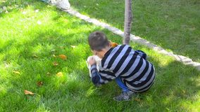 Kid collecting leafs in autumn stock video