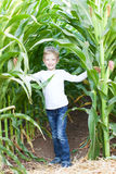 Kid in corn maze. Little boy having fun at corn maze at pumpkin patch at autumn Royalty Free Stock Photo
