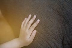 kid& x27; corpo tocante do elefante da mão de s imagem de stock