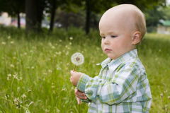 Kid with dandelion Royalty Free Stock Photos
