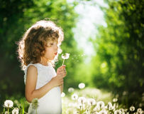Kid with dandelions Stock Photos