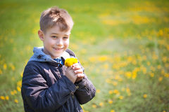 Kid with dandelions in a green park. summer Royalty Free Stock Image