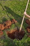 Kid digs with shovel a hole for tree planting. Royalty Free Stock Image