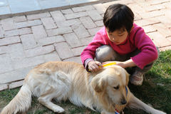 Kid and dog. A dog and a  kid playing in the yard Stock Photo