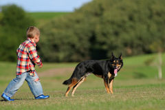 Kid and the dog. Kid plays with the dog Royalty Free Stock Images