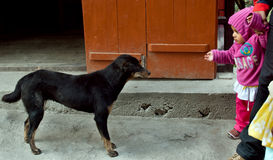 Kid and Dog. A kid is playing with a street dog at the market area of Mahatma Gandghi Marg, Gangtok, Sikkim, India Stock Photos