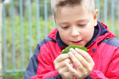 Kid examining leaf Stock Photo