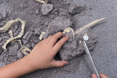 Kid excavating dinosaur bones. From a rock stock photo