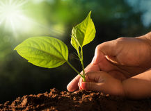 Kid and father hands planting young tree over green background Stock Photography