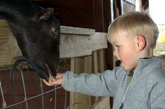 Kid feeding animal. Boy feeding goat at the petting zoo Royalty Free Stock Photo
