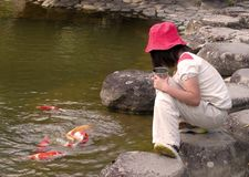 Kid feeding colorful carps Royalty Free Stock Image