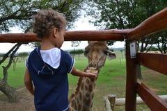 Kid feeding giraffe. Little boy feeding giraffe from hand Stock Photography