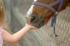 Kid feeding horse Royalty Free Stock Photos