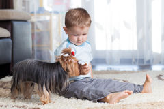 Kid feeding pet dog Royalty Free Stock Image